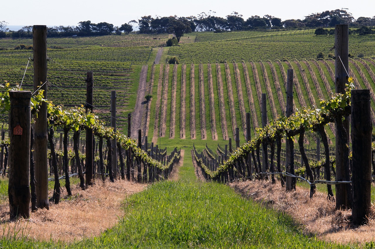 Sample some of the country's finest wines, at South Australia's McLaren Vale Sea and Vines Festival.