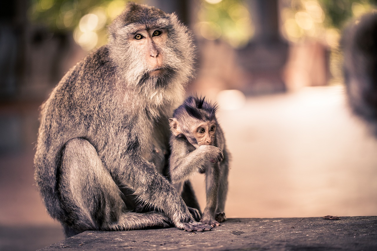 One of the best regions for children is Ubud, for the Monkey Forest.