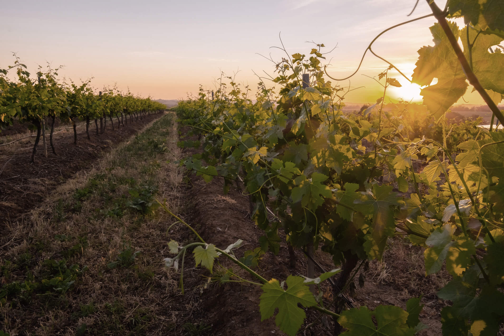 Wineries attract millions of tourists each year