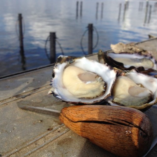 The New South Wales south coast is the home of the famous Sydney rock oyster.